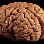 Les étranges capacités du cerveau