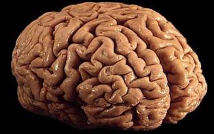 Hypnose-capcite-cerveau